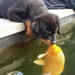 Золотая Рыбка. II этап акции Secret - VIII